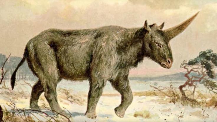 Les-scientifiques-ont-prouvé-que-les-licornes-ont-bien-existé-1-1