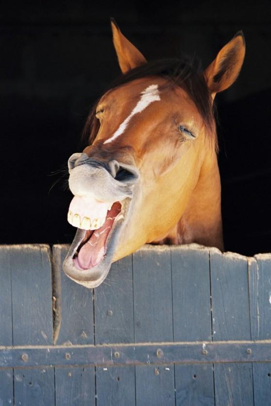 cheval-qui-rit-786deed6-a13d-4516-8b7a-40ec58f181d5